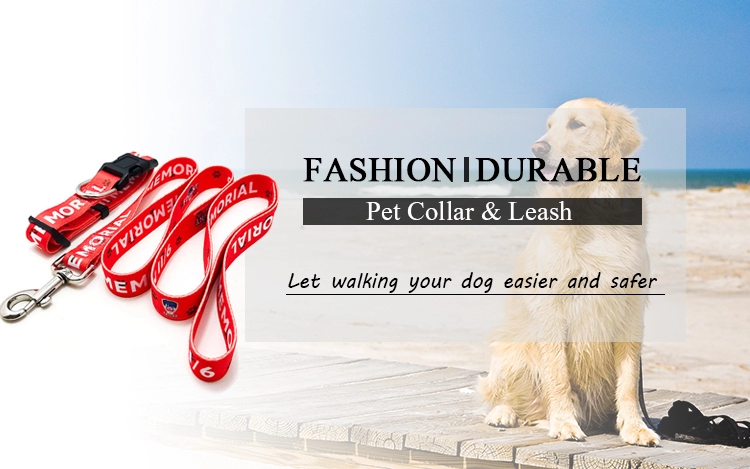 dog collars and leashes
