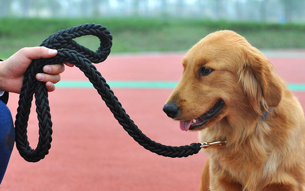 How to train the dog not to bite the leash